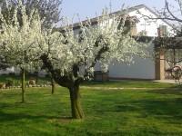 giardino rid